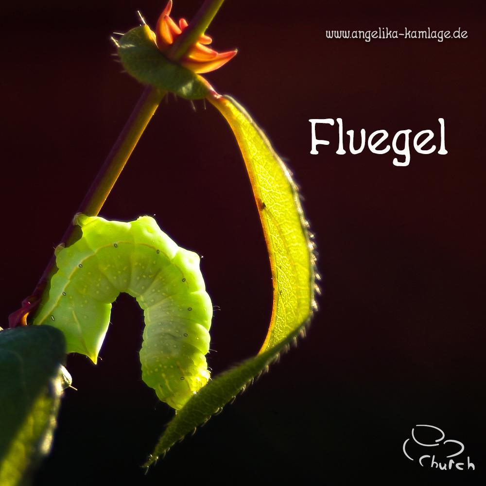 Fluegel 2.0